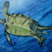 Turtle 1 by Kittie Yohe